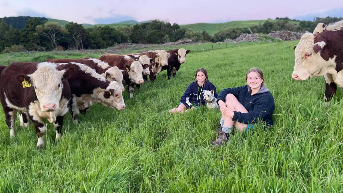 Tararua teenager wins Silver Fern Farms scholarship – NZ Herald